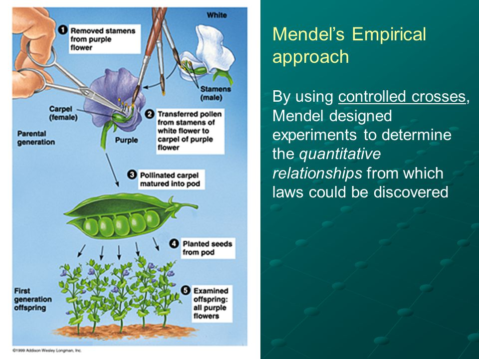 Mendel's Empirical approach