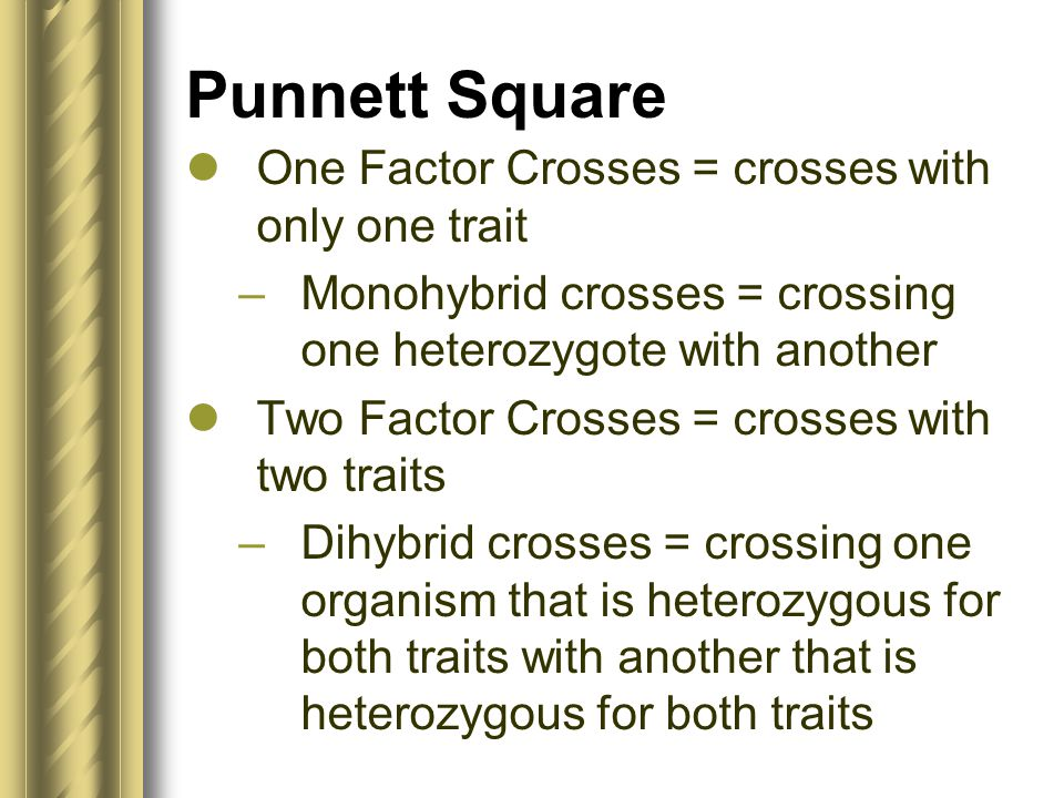 Punnett Square One Factor Crosses = crosses with only one trait