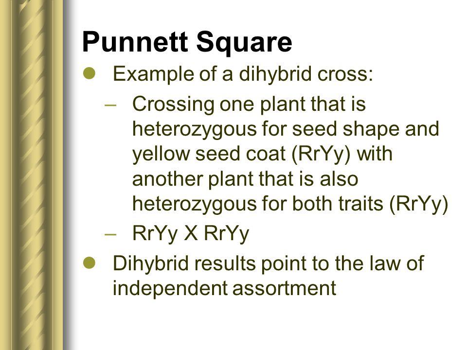 Punnett Square Example of a dihybrid cross: