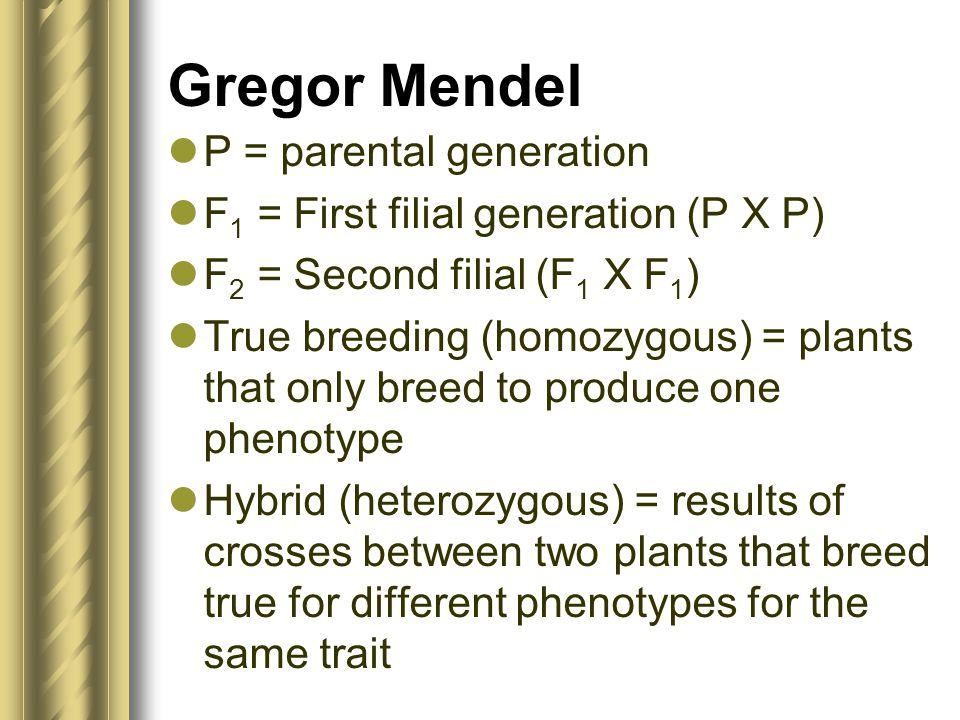Gregor Mendel P = parental generation