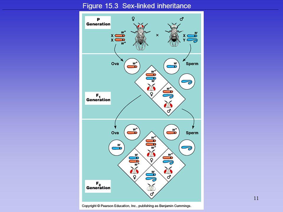 Figure 15.3 Sex-linked inheritance