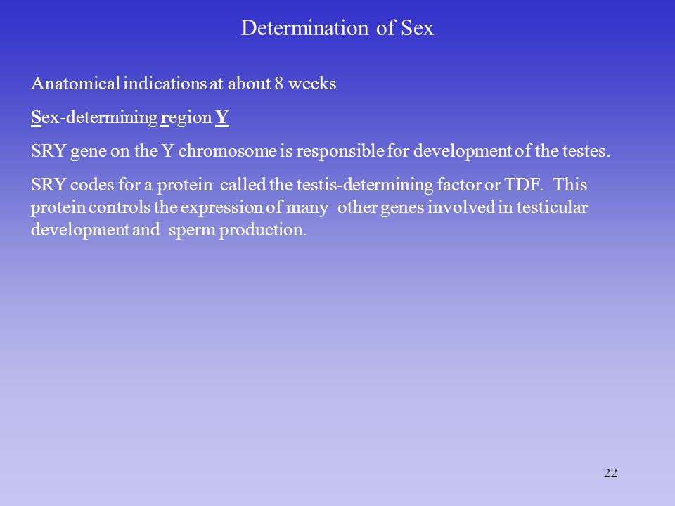 Determination of Sex Anatomical indications at about 8 weeks