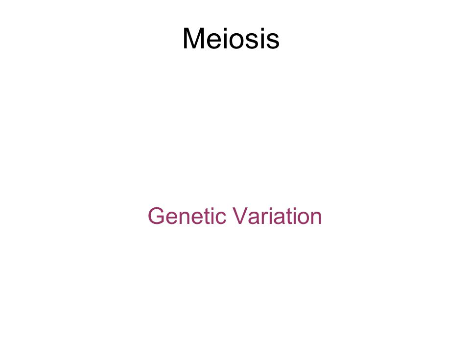 Meiosis Genetic Variation
