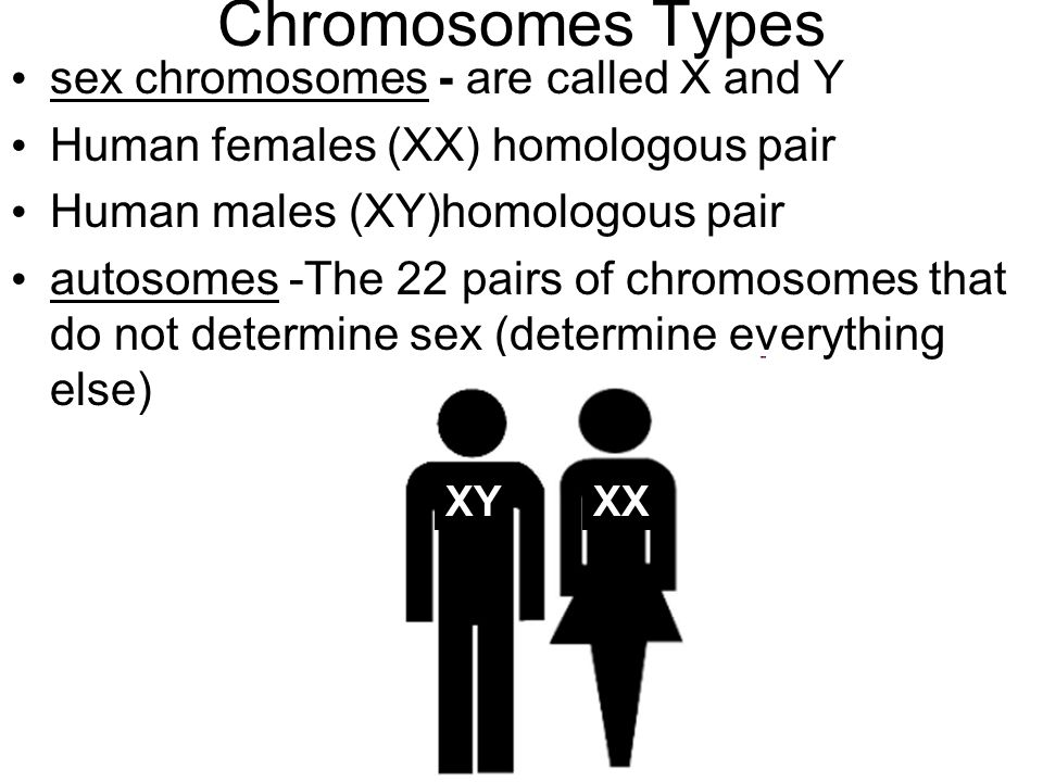 Chromosomes Types sex chromosomes - are called X and Y