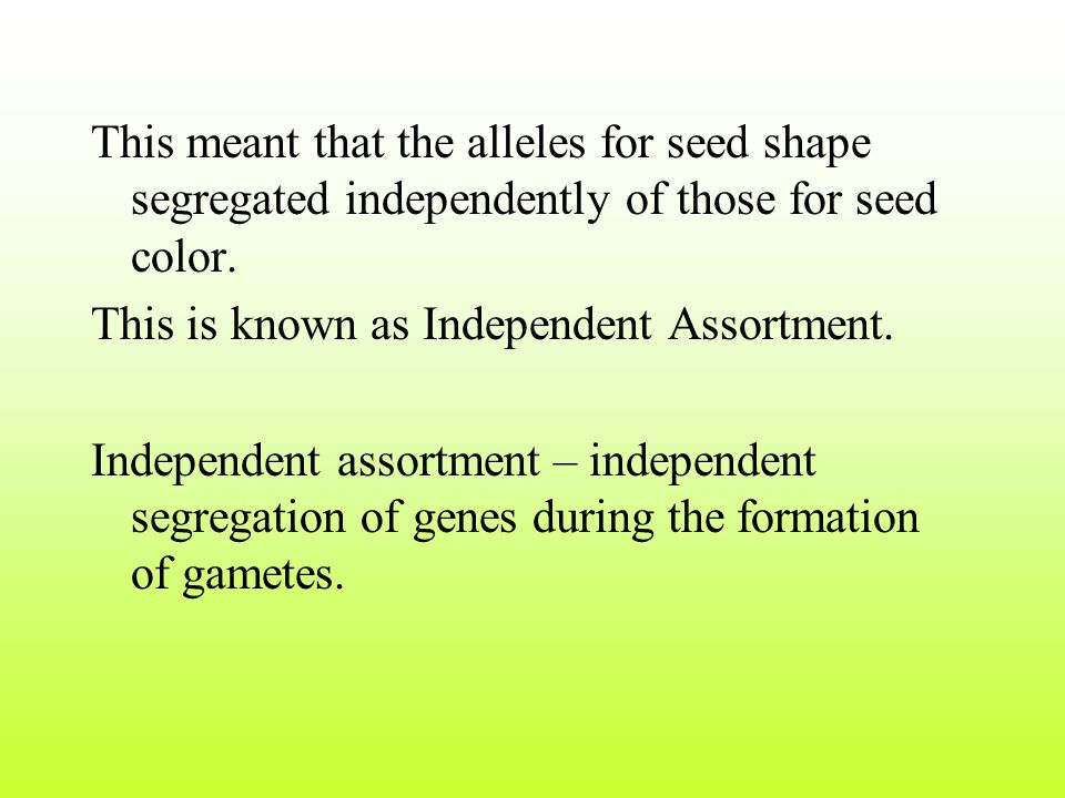 This meant that the alleles for seed shape segregated independently of those for seed color.
