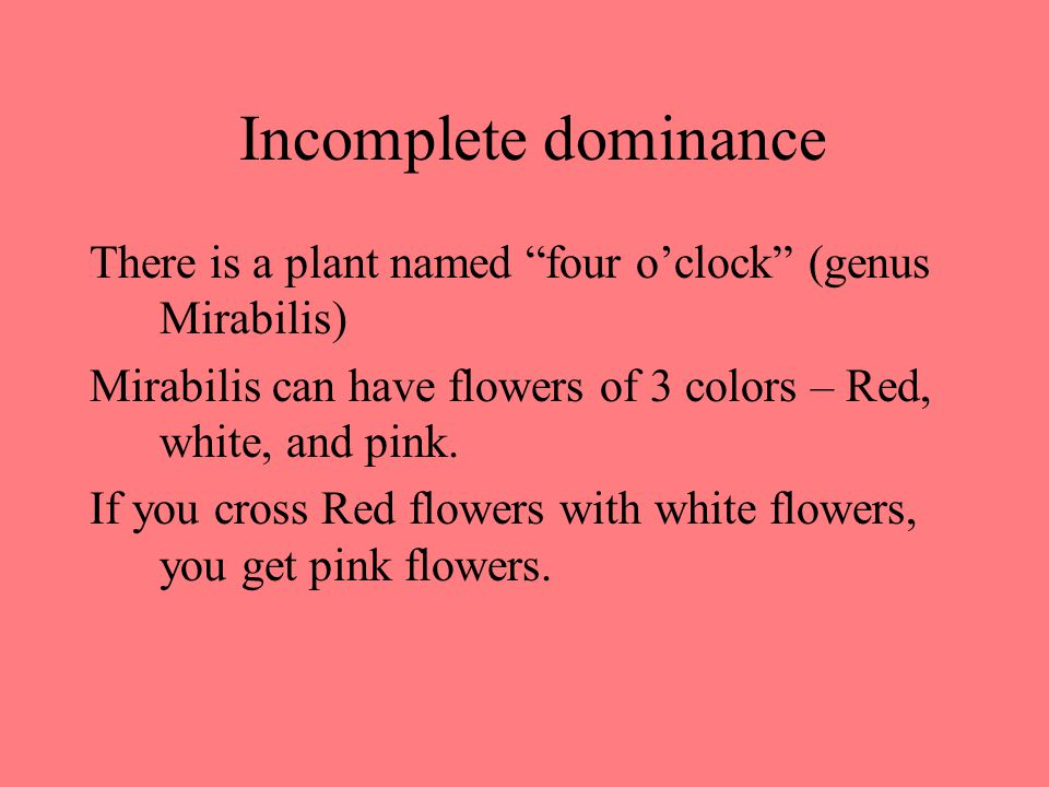 Incomplete dominance There is a plant named four o'clock (genus Mirabilis) Mirabilis can have flowers of 3 colors – Red, white, and pink.