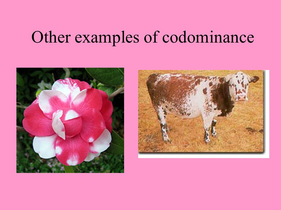 Other examples of codominance