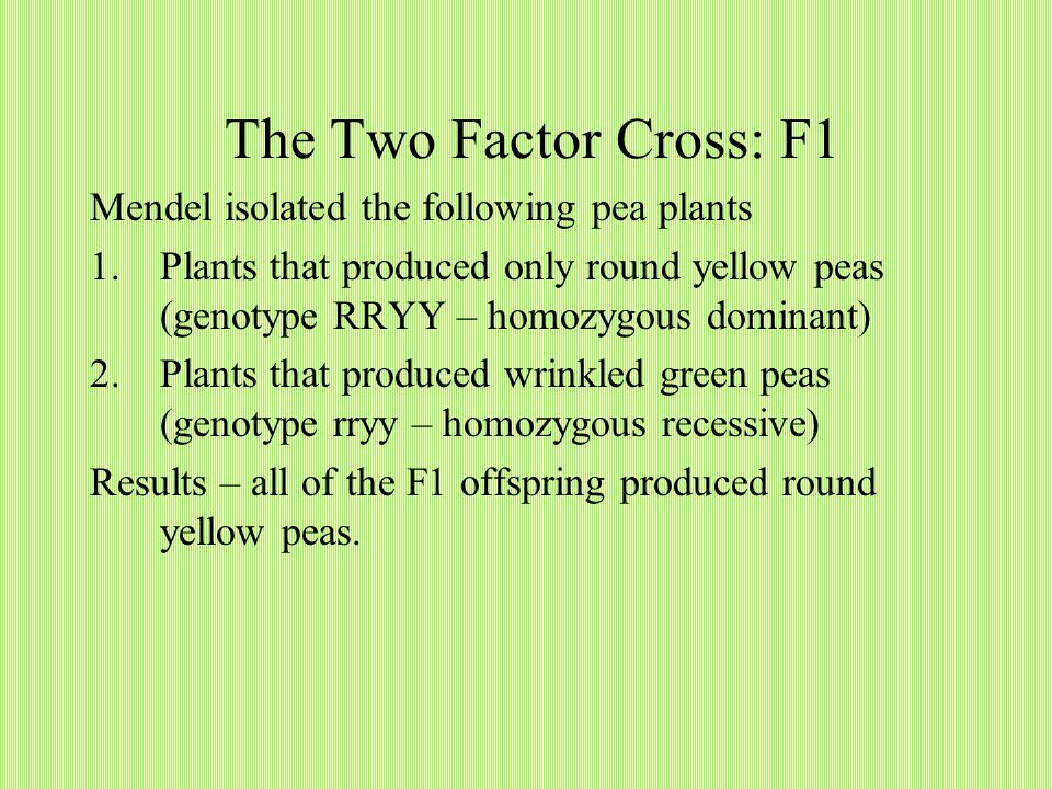 The Two Factor Cross: F1 Mendel isolated the following pea plants