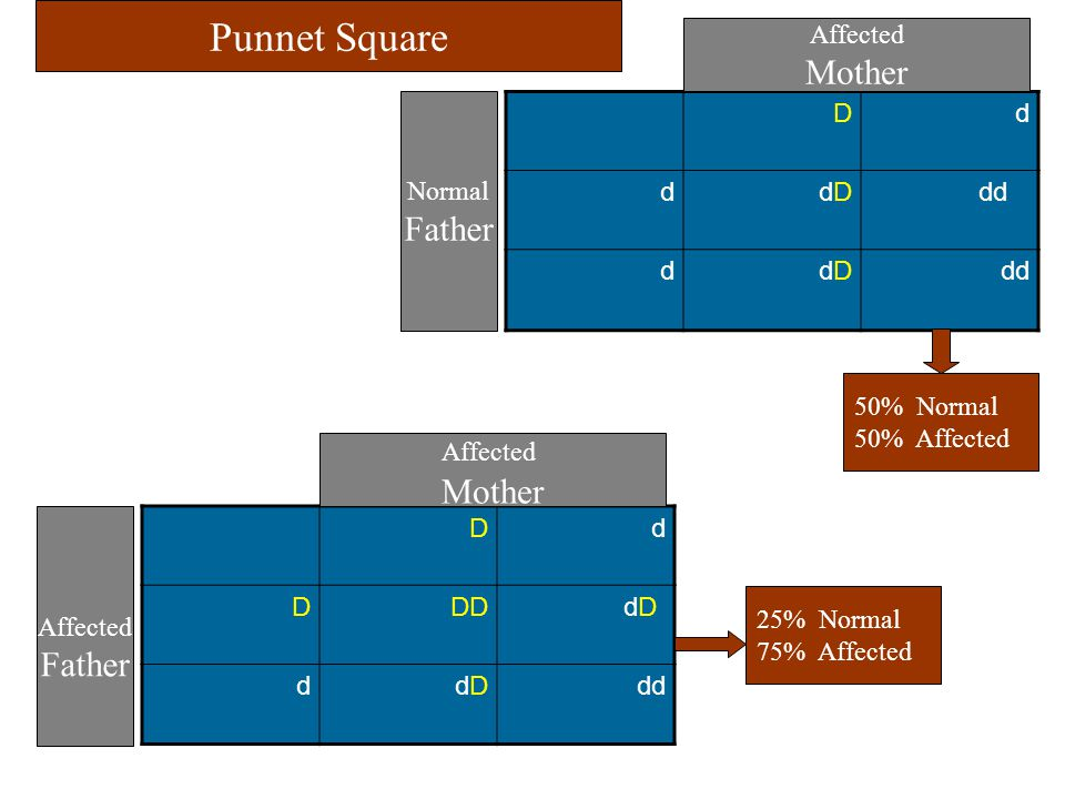 Punnet Square Mother Father Mother Father Affected Normal D d dD dd