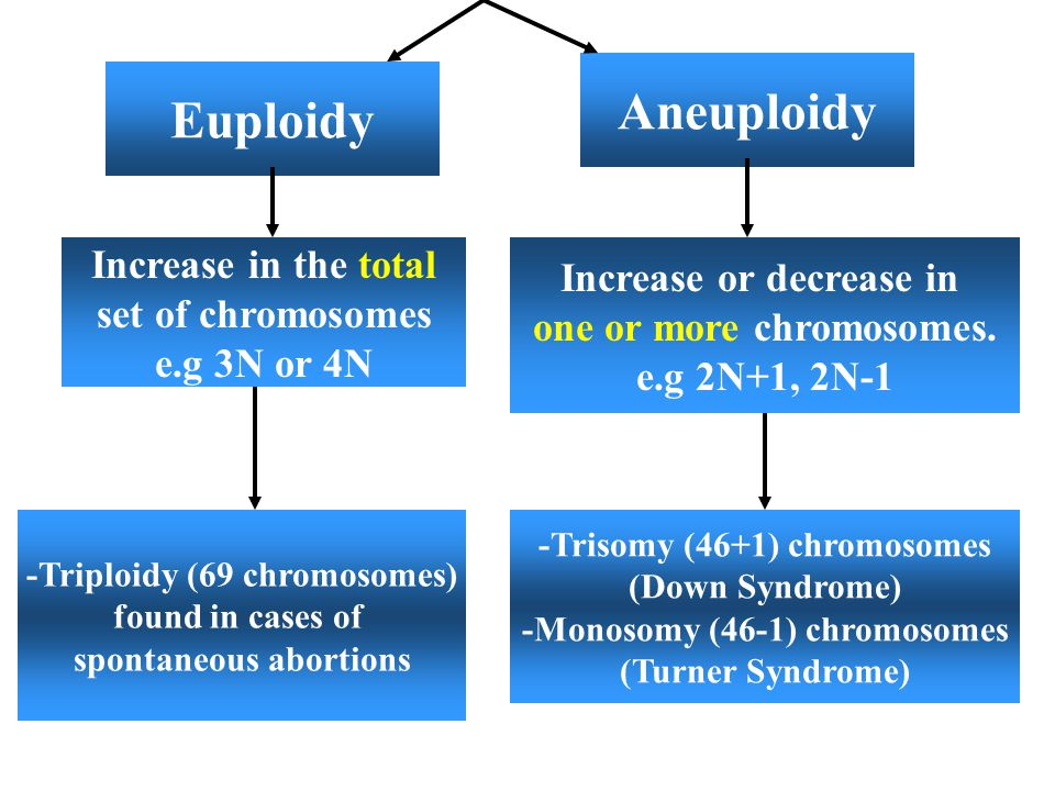 Aneuploidy Euploidy Increase in the total Increase or decrease in