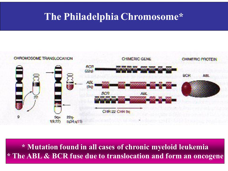 The Philadelphia Chromosome*
