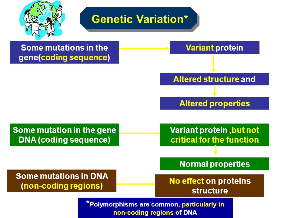 Genetic Variation* Some mutations in the gene(coding sequence)
