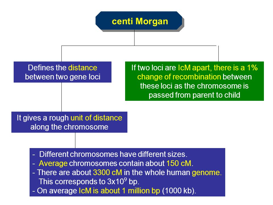 centi Morgan Defines the distance between two gene loci