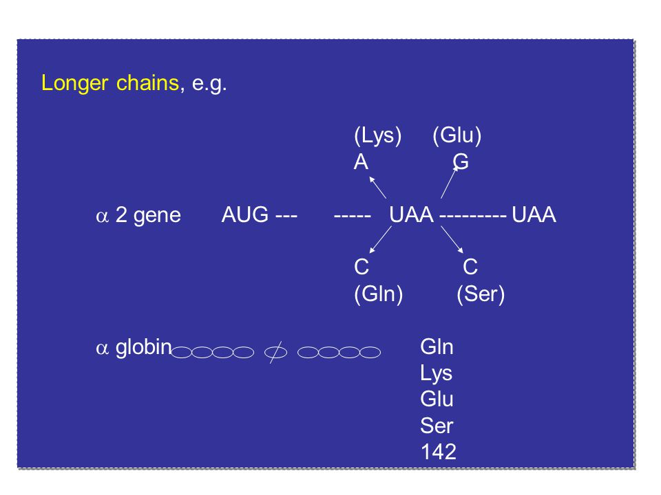 Longer chains, e.g. (Lys) (Glu) A G.  2 gene AUG --- ----- UAA --------- UAA.