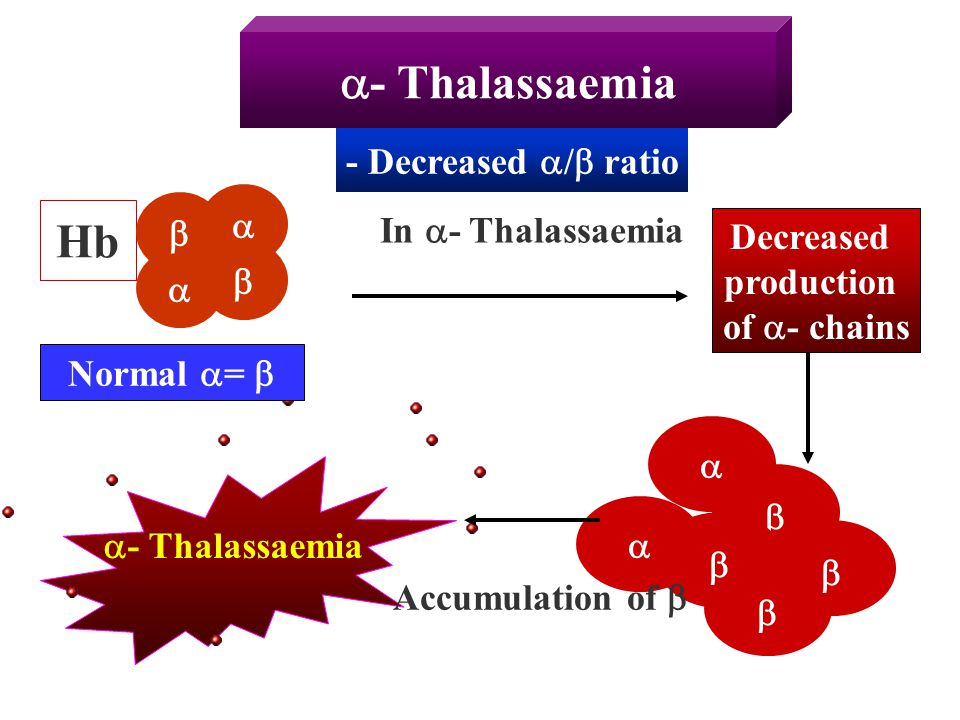 - Thalassaemia Hb - Decreased / ratio   In - Thalassaemia