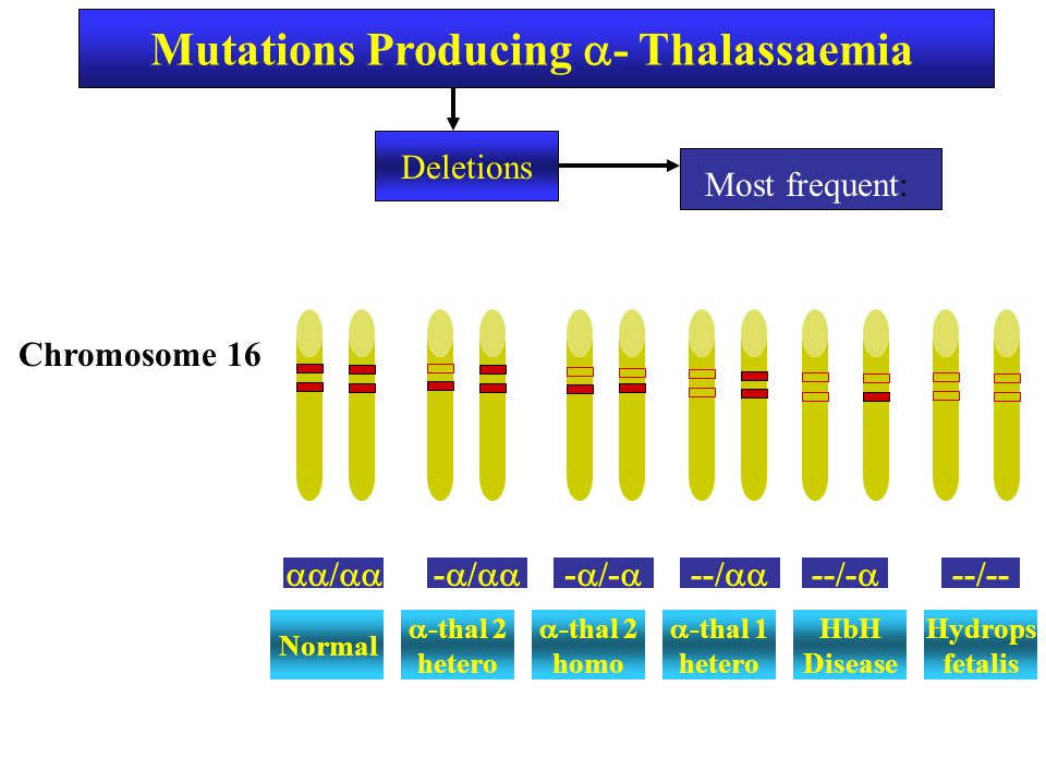 Mutations Producing - Thalassaemia