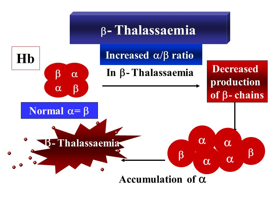 Hb - Thalassaemia     - Thalassaemia Increased / ratio