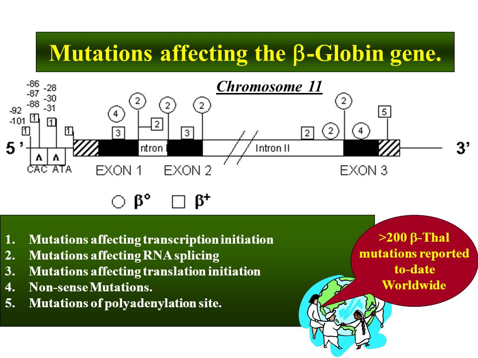 Mutations affecting the -Globin gene.