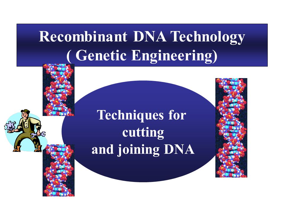 Recombinant DNA Technology ( Genetic Engineering)