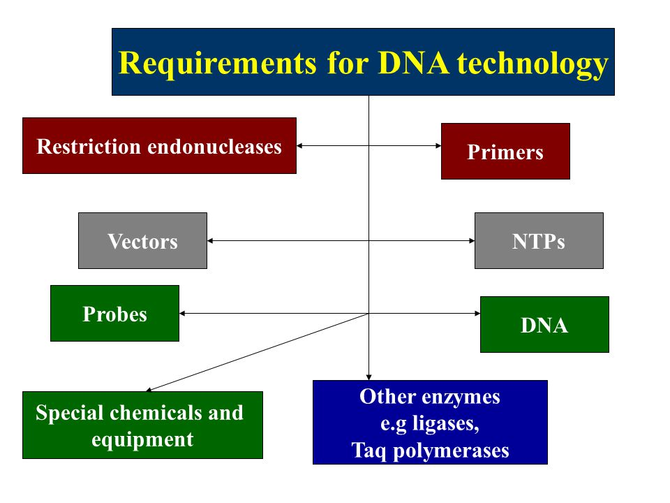 Requirements for DNA technology Restriction endonucleases