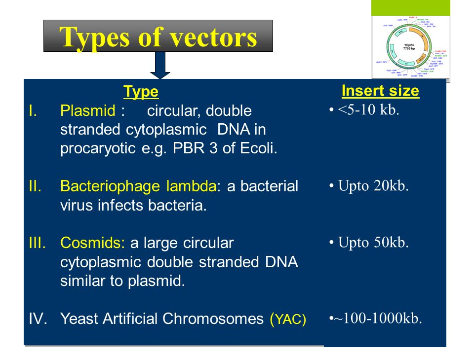 Types of vectors Type Insert size
