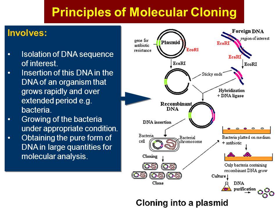 Principles of Molecular Cloning