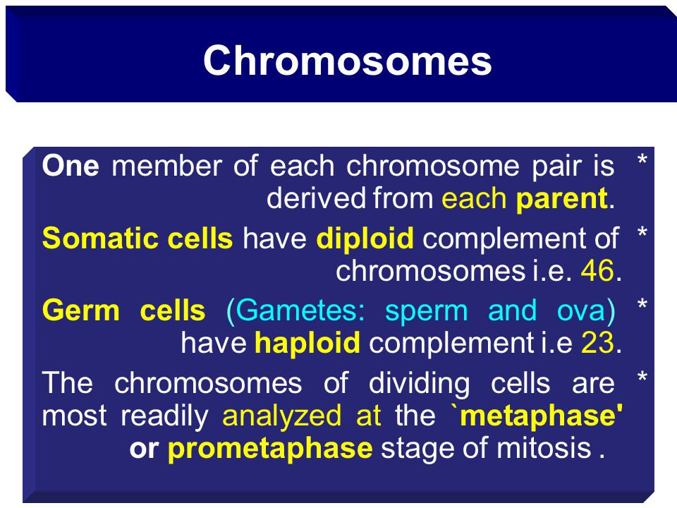 Chromosomes * One member of each chromosome pair is derived from each parent. * Somatic cells have diploid complement of chromosomes i.e. 46.
