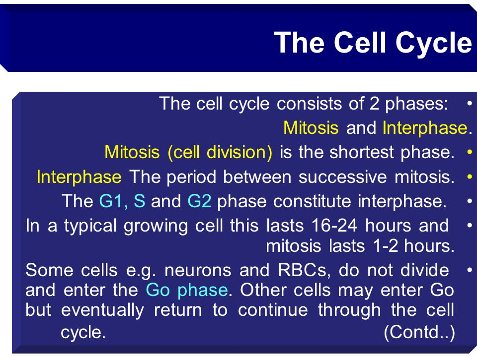 The Cell Cycle The cell cycle consists of 2 phases: