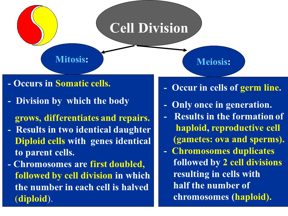 Cell Division Mitosis: Meiosis: - Occurs in Somatic cells.