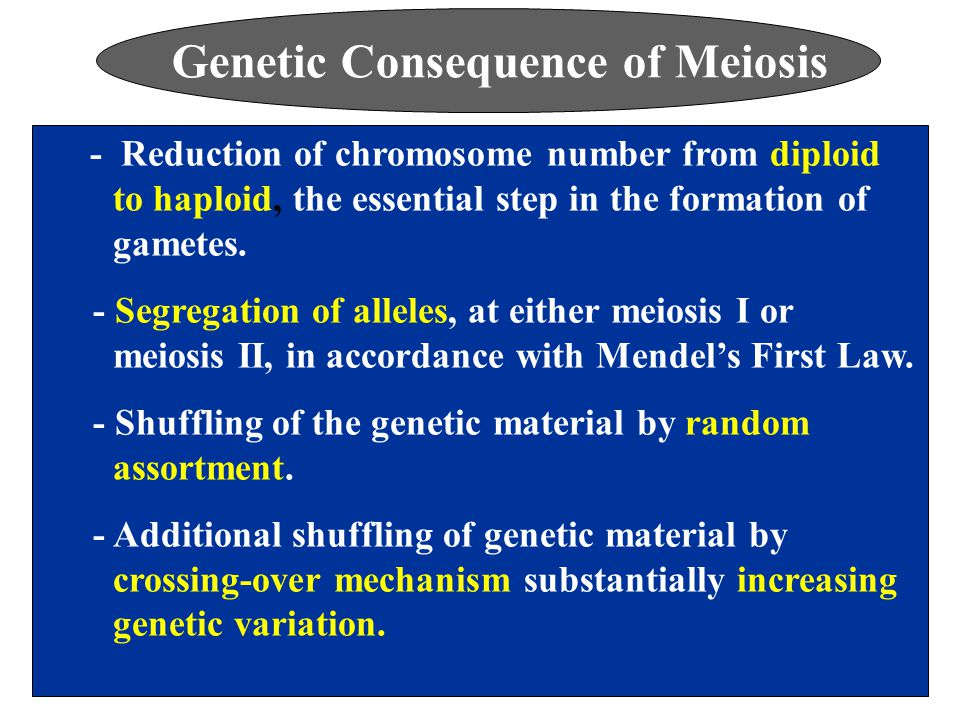 Genetic Consequence of Meiosis