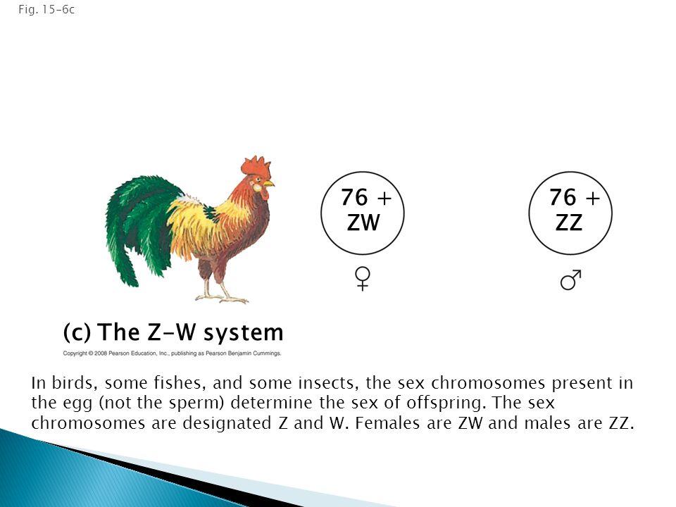 (c) The Z-W system 76 + ZW 76 + ZZ