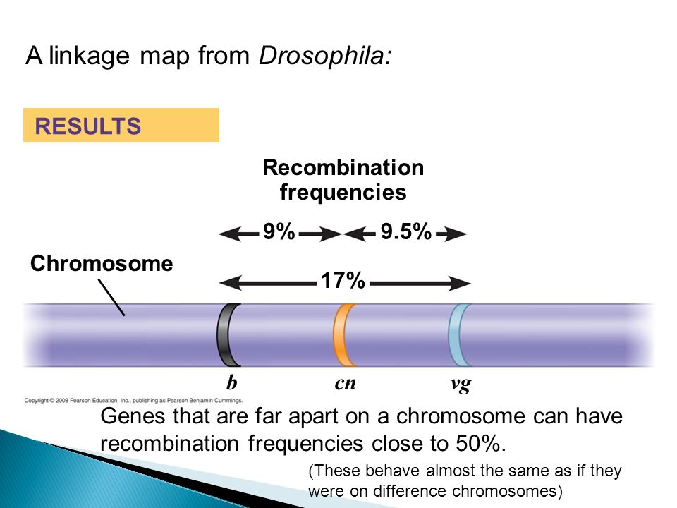 A linkage map from Drosophila: