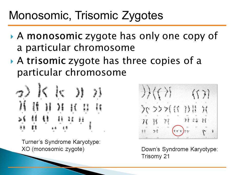 Monosomic, Trisomic Zygotes