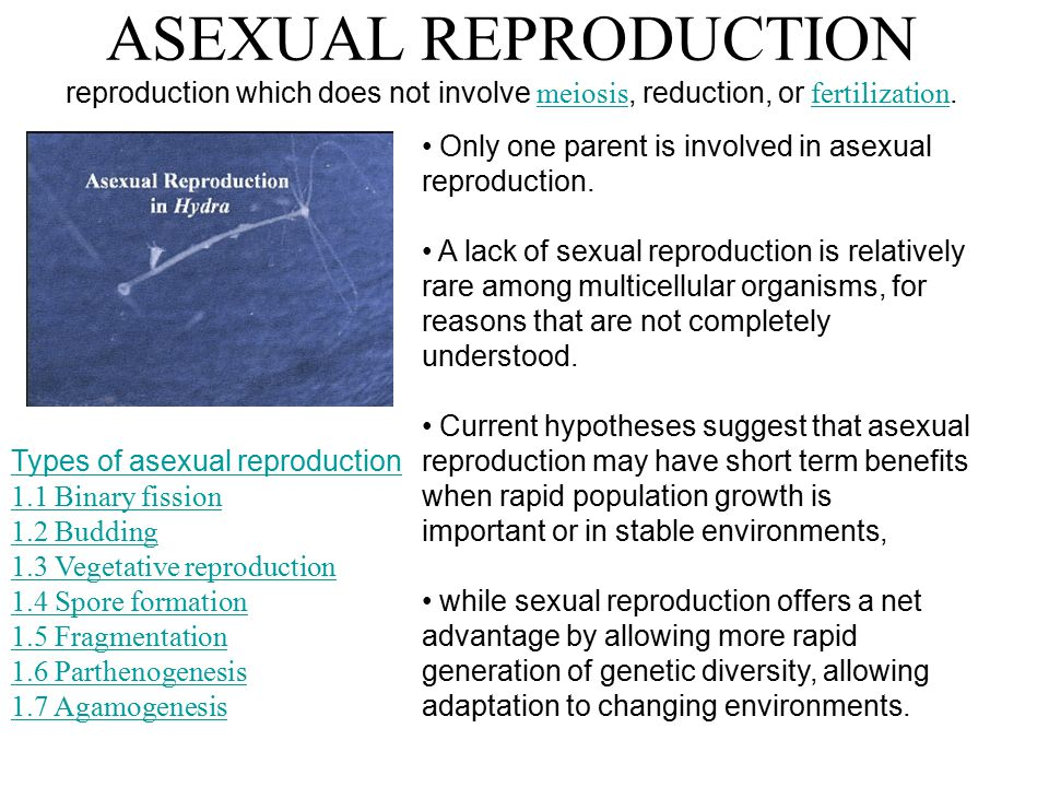 ASEXUAL REPRODUCTION reproduction which does not involve meiosis, reduction, or fertilization.
