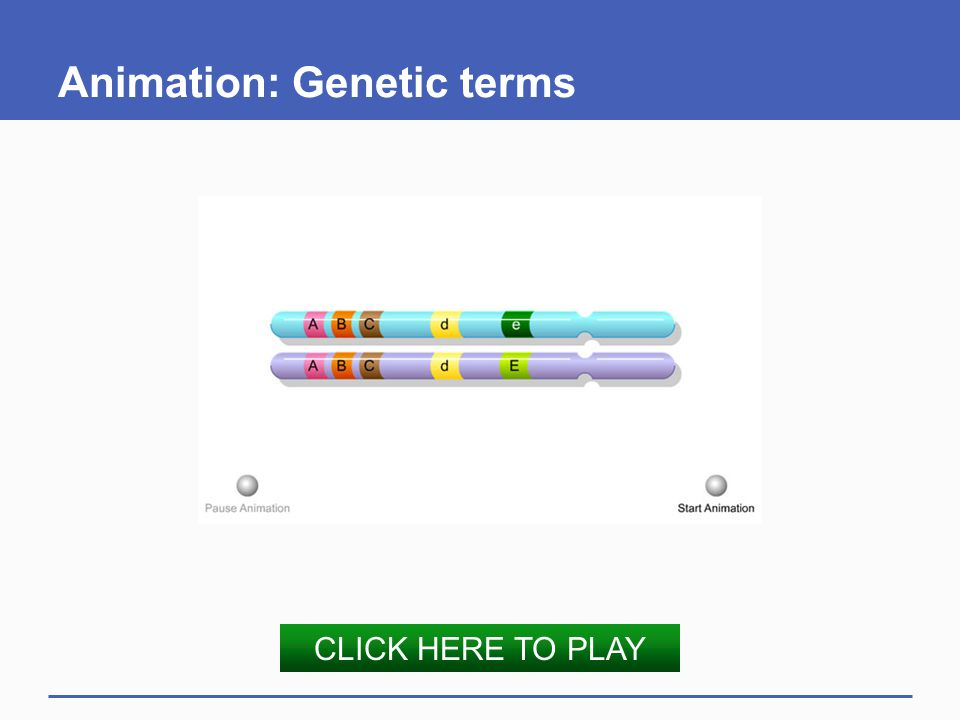 Animation: Genetic terms
