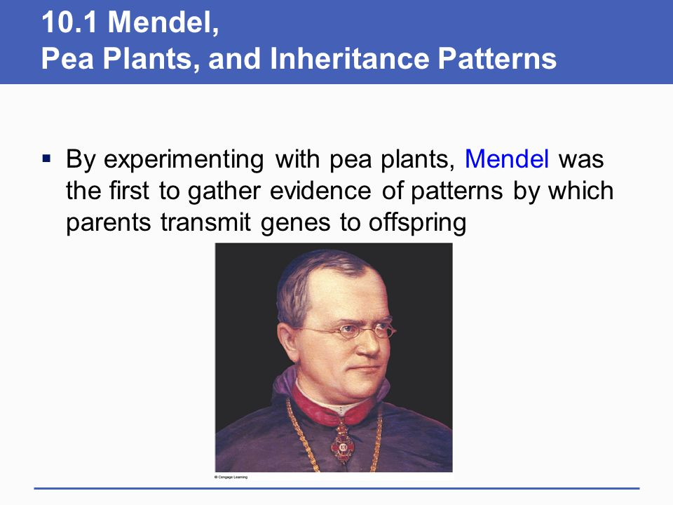 10.1 Mendel, Pea Plants, and Inheritance Patterns