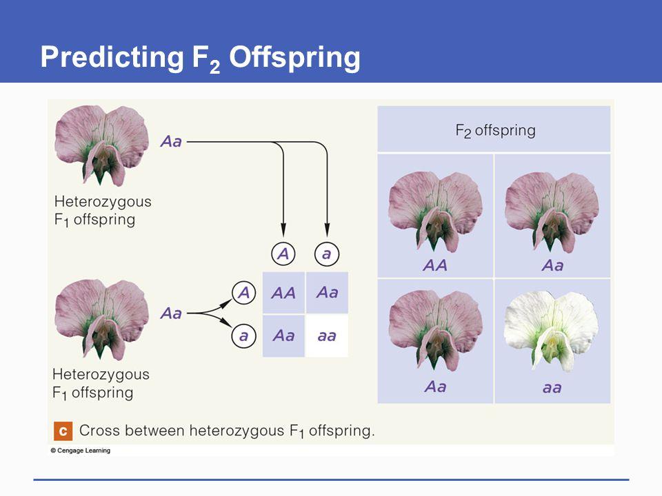Predicting F2 Offspring
