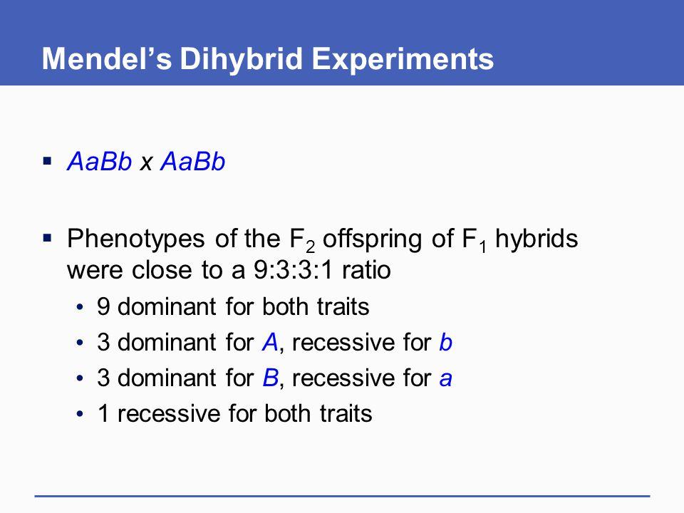 Mendel's Dihybrid Experiments