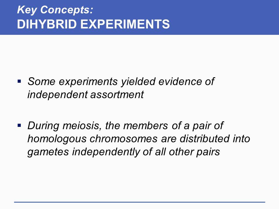 Key Concepts: DIHYBRID EXPERIMENTS
