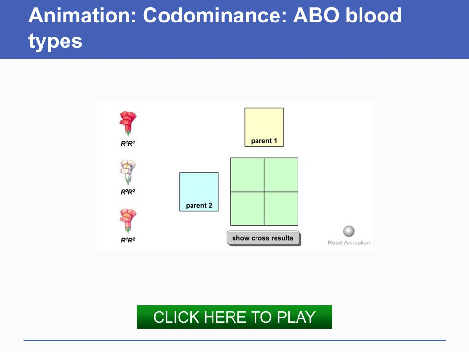 Animation: Codominance: ABO blood types