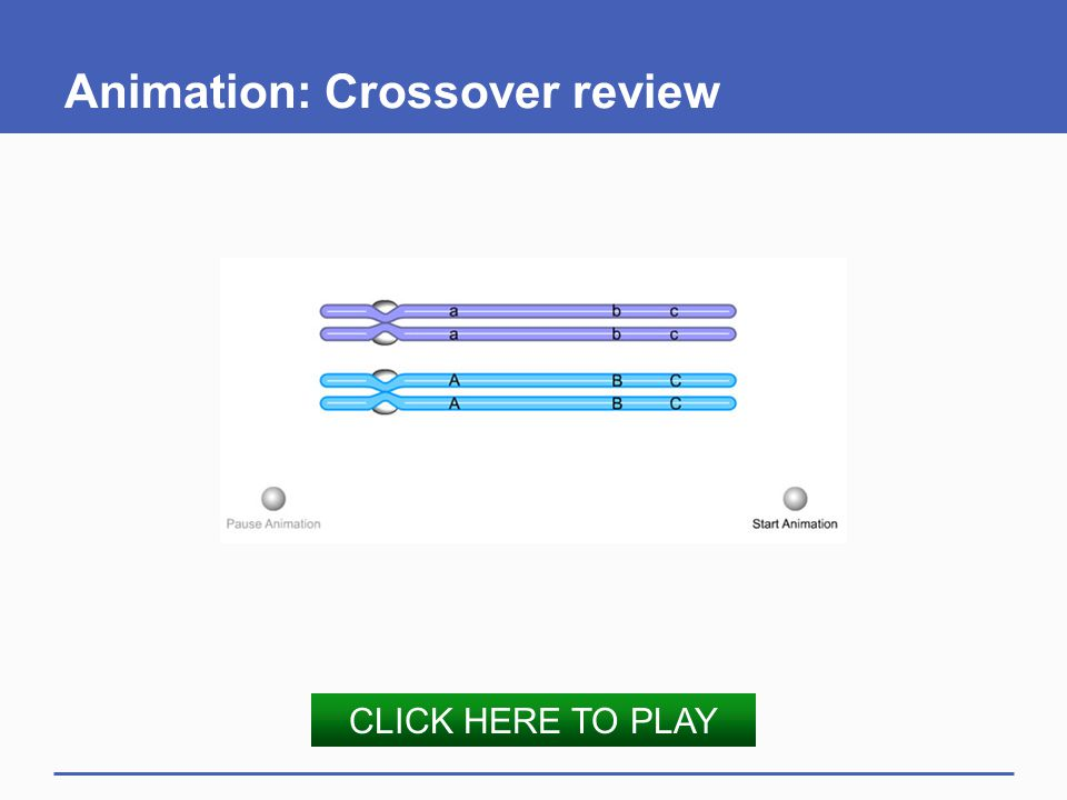 Animation: Crossover review