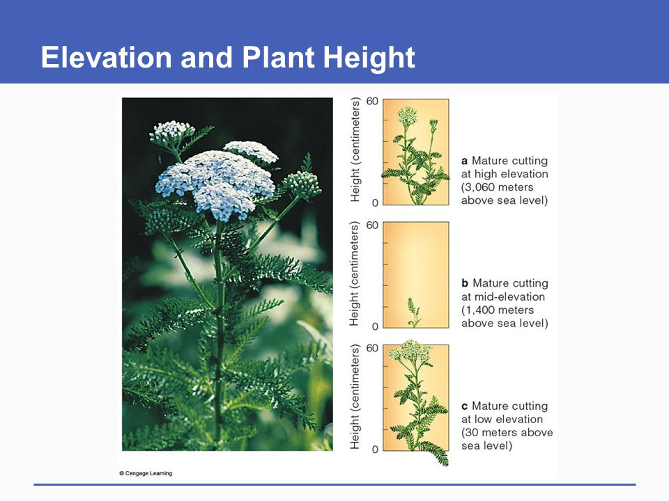Elevation and Plant Height