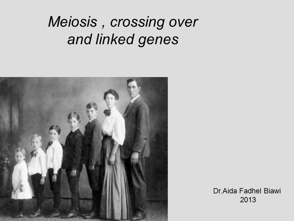 Meiosis , crossing over and linked genes