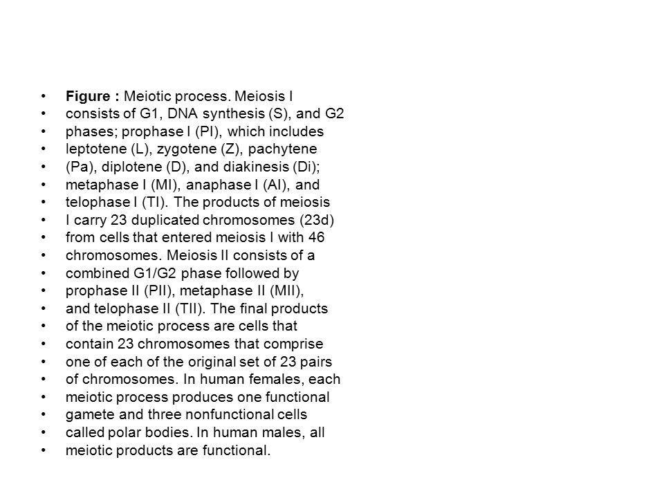Figure : Meiotic process. Meiosis I