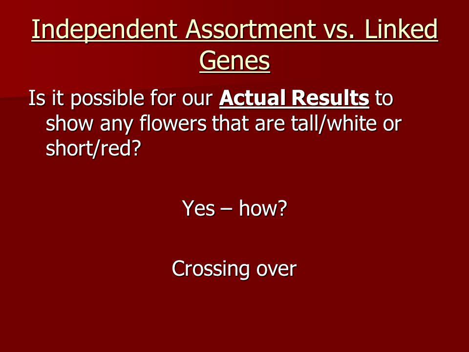 Independent Assortment vs. Linked Genes