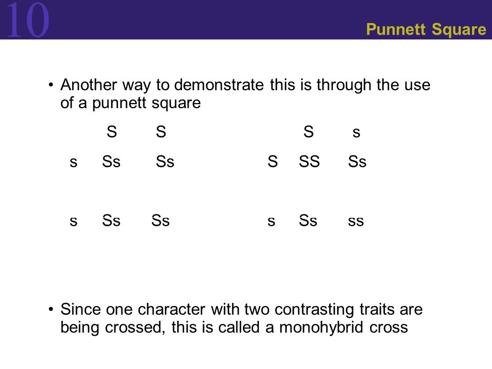 Punnett Square Another way to demonstrate this is through the use of a punnett square. S S S s.