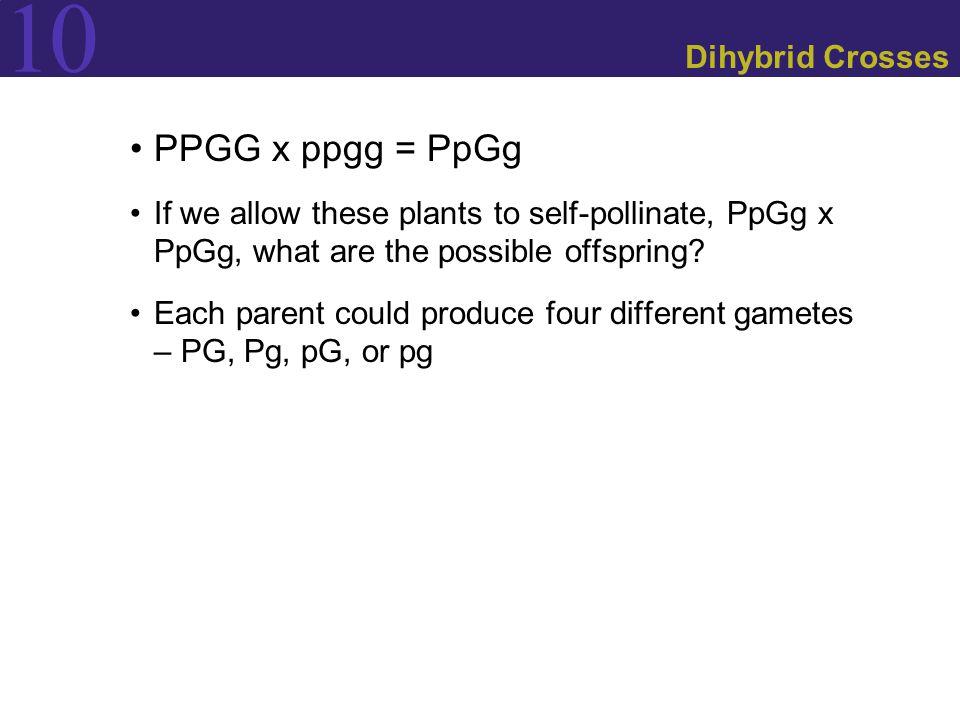 PPGG x ppgg = PpGg Dihybrid Crosses