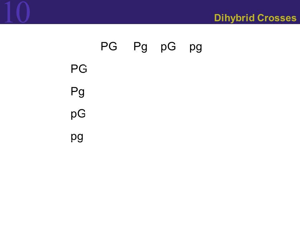 Dihybrid Crosses PG Pg pG pg PG Pg pG pg