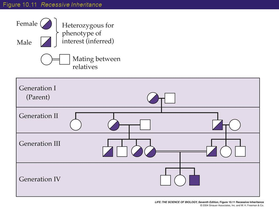 Figure 10.11 Recessive Inheritance