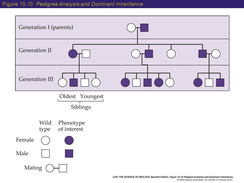 Figure 10.10 Pedigree Analysis and Dominant Inheritance